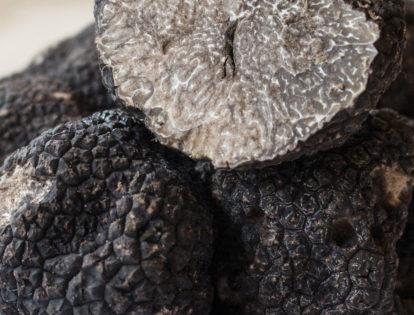 close up of black truffles